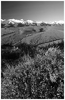 Berry plants, braided rivers, Alaska Range in early morning from Polychrome Pass. Denali National Park, Alaska, USA. (black and white)