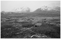 Tundra in autumn color and Polychrome Mountains in fog. Denali National Park, Alaska, USA. (black and white)