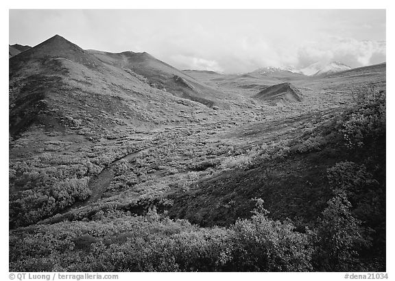 Gentle valley and river with low vegetation. Denali  National Park (black and white)