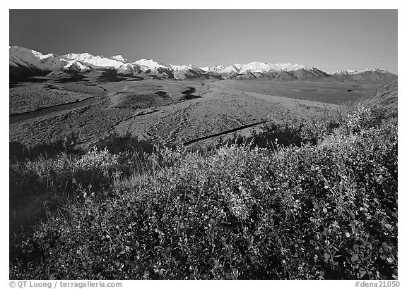 Wide valley and gravel bars from Polychrome Pass, morning. Denali  National Park (black and white)