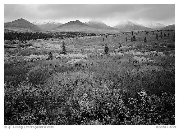 Mosaic of colors on tundra and lower peaks in stormy weather. Denali  National Park (black and white)