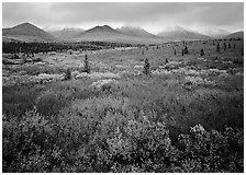 Mosaic of colors on tundra and lower peaks in stormy weather. Denali  National Park ( black and white)