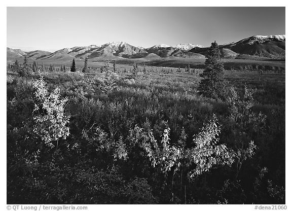 Tundra and mountain range near Savage River. Denali  National Park (black and white)