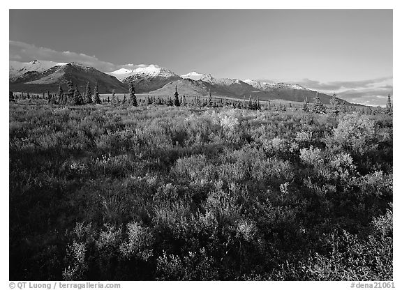 Late afternoon light on tundra and smaller mountain range. Denali National Park (black and white)