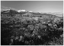 Late afternoon light on tundra and smaller mountain range. Denali National Park ( black and white)