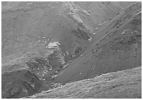 Foothills covered with tundra near Eielson. Denali National Park, Alaska, USA. (black and white)