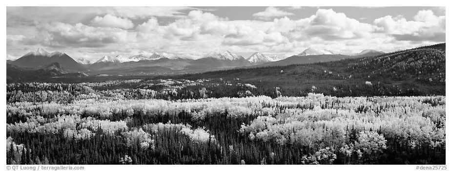 Mountain landscape with aspens in fall color. Denali National Park (black and white)