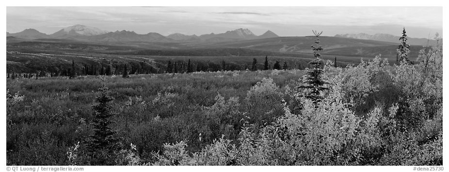 Tundra and Alaska range in autumn. Denali National Park (black and white)