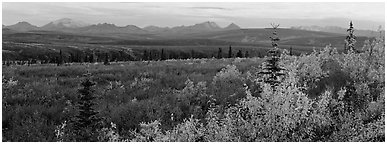 Tundra and Alaska range in autumn. Denali National Park (Panoramic black and white)