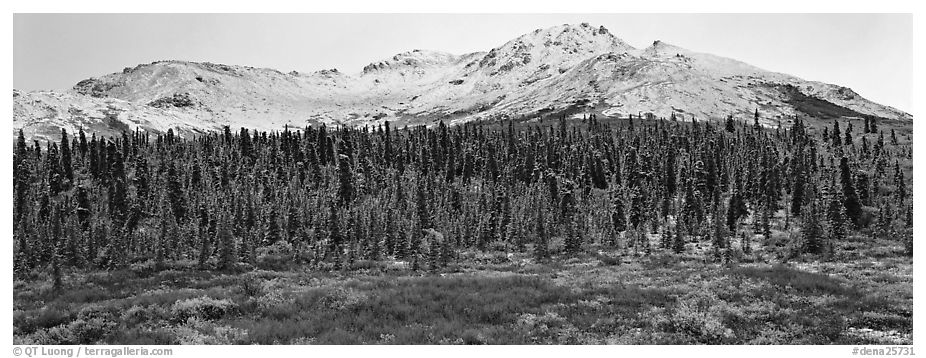 Boreal landscape with tundra, forest, and snowy mountains. Denali National Park (black and white)