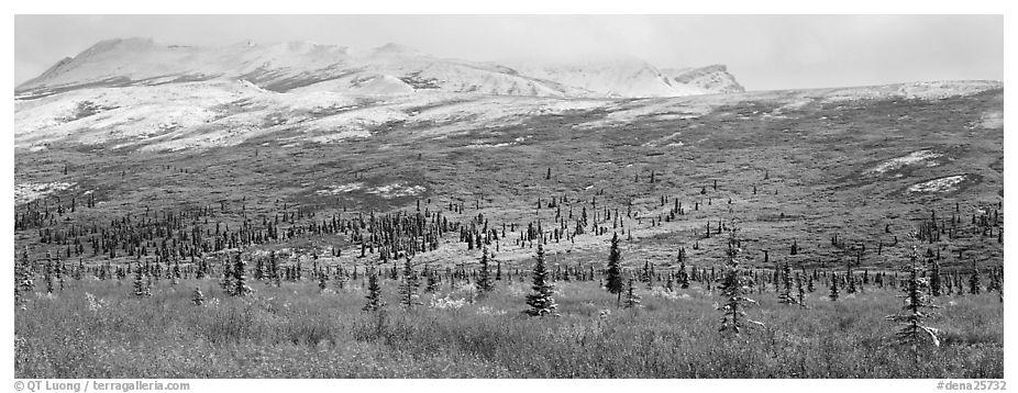 Northern latitudes scenery in autumn. Denali National Park (black and white)