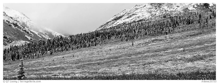 Autumn tundra landscape with fresh dusting of snow. Denali National Park (black and white)