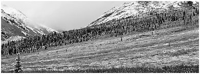 Autumn tundra landscape with fresh dusting of snow. Denali National Park (Panoramic black and white)