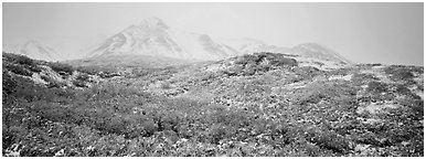 Misty mountain landscape with fresh now and autumn colors. Denali National Park (Panoramic black and white)
