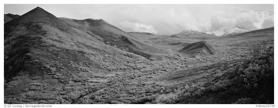 Tundra-covered foothills and valley. Denali National Park (black and white)