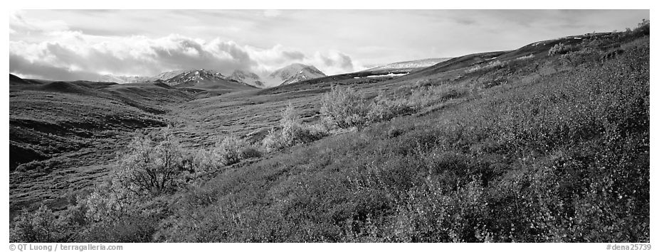 Northern mountain landscape in autumn. Denali National Park (black and white)