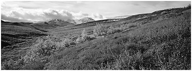 Northern mountain landscape in autumn. Denali National Park (Panoramic black and white)