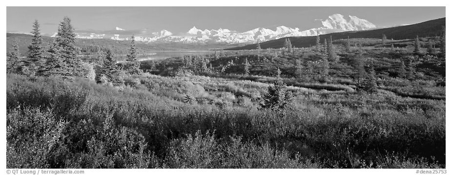 Seasons passing on the tundra. Denali National Park (black and white)