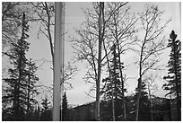 Trees and mountains in winter, Denali visitor center window reflexion. Denali National Park, Alaska, USA. (black and white)