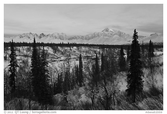 Alaska range and boreal forest in winter. Denali National Park (black and white)