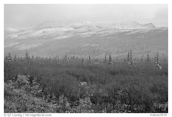 Fog and fresh snow on tundra near Savage River. Denali National Park (black and white)