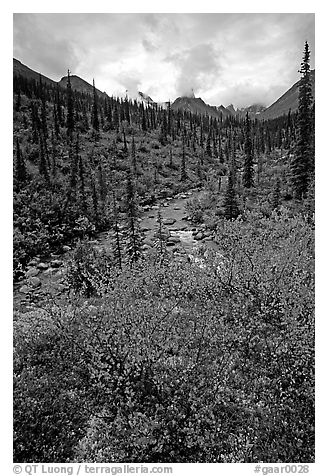 Berry plants in fall color and Arrigetch creek. Gates of the Arctic National Park (black and white)