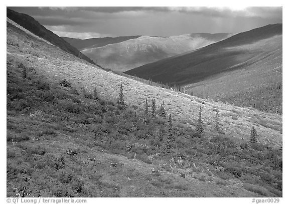 Arrigetch valley with caribou. Gates of the Arctic National Park (black and white)