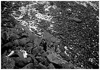 Backpacker in boulder field at the base of the Arrigetch Peaks. Gates of the Arctic National Park, Alaska (black and white)