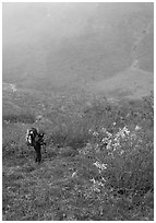 Backpacker in Arrigetch Valley. Gates of the Arctic National Park, Alaska (black and white)