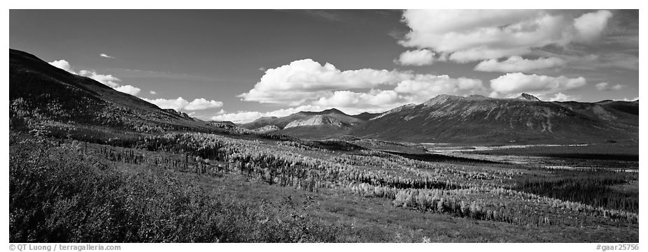 Boreal forest in autumn. Gates of the Arctic National Park (black and white)