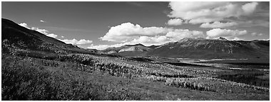 Boreal forest in autumn. Gates of the Arctic National Park (Panoramic black and white)