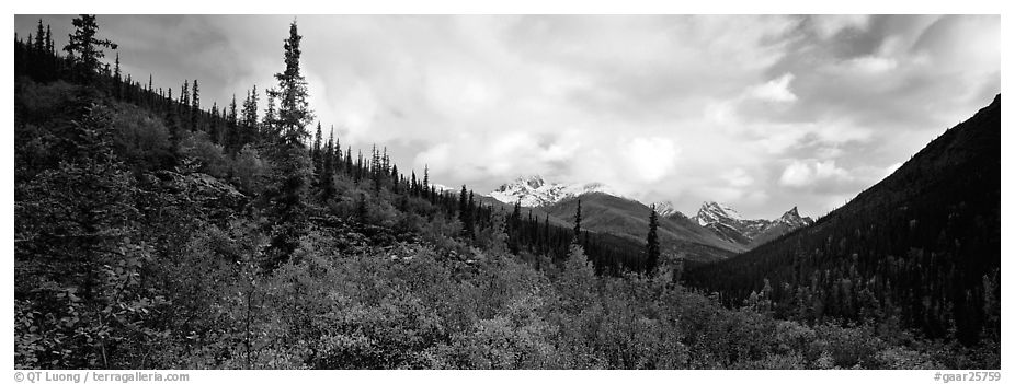 Boreal forest landscape. Gates of the Arctic National Park (black and white)