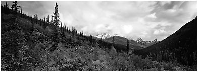 Boreal forest landscape. Gates of the Arctic National Park (Panoramic black and white)