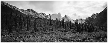 Taiga forest and peaks with fresh dusting of snow. Gates of the Arctic National Park (Panoramic black and white)