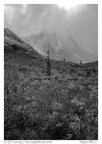 Tundra and Arrigetch Peaks in fog. Gates of the Arctic National Park (black and white)