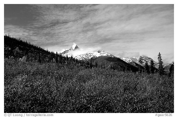 Arrigetch Peaks and tundra from Arrigetch Creek entrance, morning. Gates of the Arctic National Park (black and white)