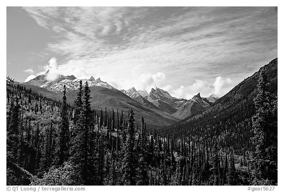 Arrigetch Peaks and spruce forest from Arrigetch Creek entrance, morning. Gates of the Arctic National Park (black and white)