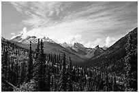 Arrigetch Peaks and spruce forest from Arrigetch Creek entrance, morning. Gates of the Arctic National Park, Alaska, USA. (black and white)