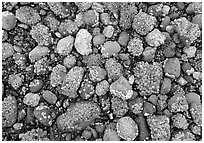 Rocks covered with mussels at low tide, Muir inlet. Glacier Bay National Park ( black and white)