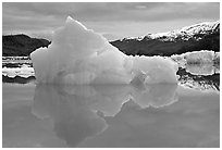 Blue iceberg, Mc Bride inlet. Glacier Bay National Park ( black and white)