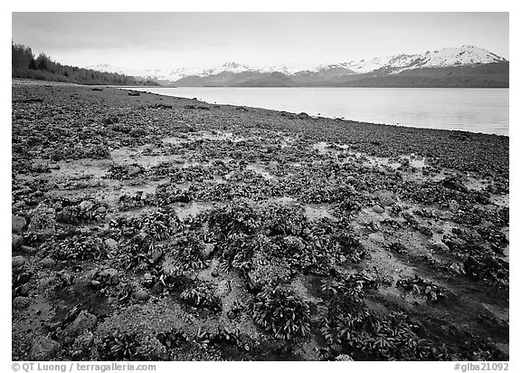 Tidal flats, Muir inlet. Glacier Bay National Park (black and white)