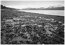 Tidal flats, Muir inlet. Glacier Bay National Park, Alaska, USA. (black and white)