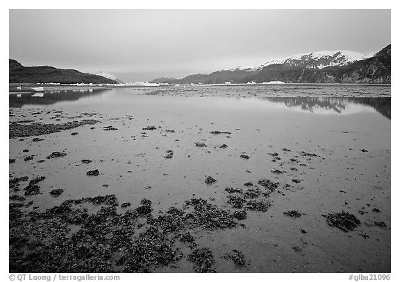 Mud flats near Mc Bride glacier, Muir inlet. Glacier Bay National Park (black and white)