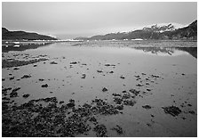 Mud flats near Mc Bride glacier, Muir inlet. Glacier Bay National Park ( black and white)