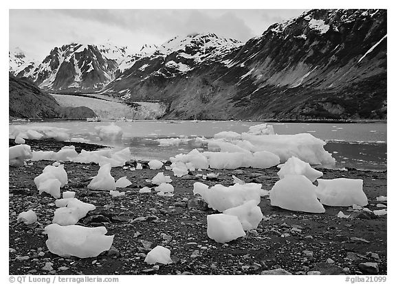 Beached icebergs and McBride Glacier. Glacier Bay National Park (black and white)