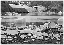 Icebergs, McBride Inlet, and McBride Glacier. Glacier Bay National Park ( black and white)