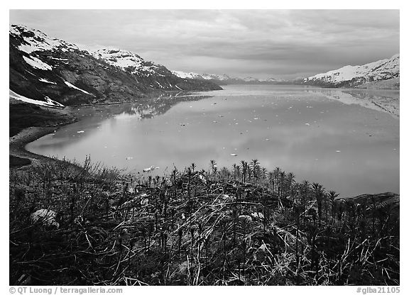West arm seen from the entrance of John Hopkins inlet. Glacier Bay National Park (black and white)
