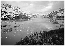 Dwarf plants and John Hopkins inlet. Glacier Bay National Park ( black and white)