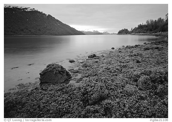 Charpentier inlet. Glacier Bay National Park (black and white)