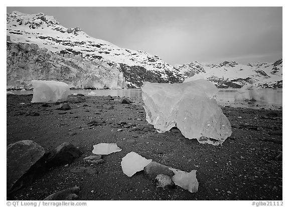 Translucent icebergs at the base of Lamplugh Glacier, morning. Glacier Bay National Park (black and white)